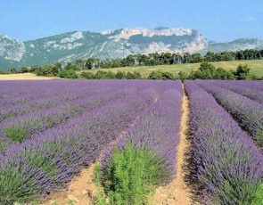 provence-vallee-principale.jpg