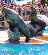 Marineland in Antibes