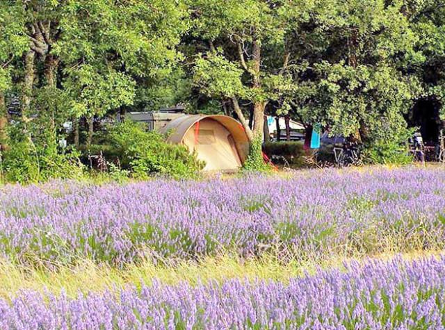 Camping Les Truffieres Drôme provencale lavande Grignan-4