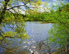 Camping Le Lac de Bonnefon